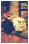 Highlight for Album: Kitties