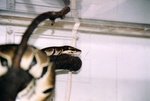 snakes_N_kitties_pic0004.JPG