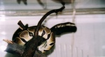 snakes_N_kitties_pic0005.JPG