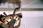 snakes_N_kitties_pic0006.JPG