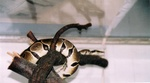 snakes_N_kitties_pic0008.JPG