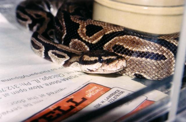 Snakes kitties 2 pic11.JPG
