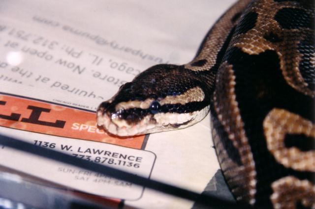 Snakes kitties 2 pic6.jpg