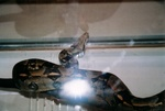 snakes_N_kitties_pic0001.JPG