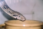 snakes_N_kitties_pic0003.JPG